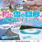 桜と雪の回廊 八幡平ドラゴンアイ2020